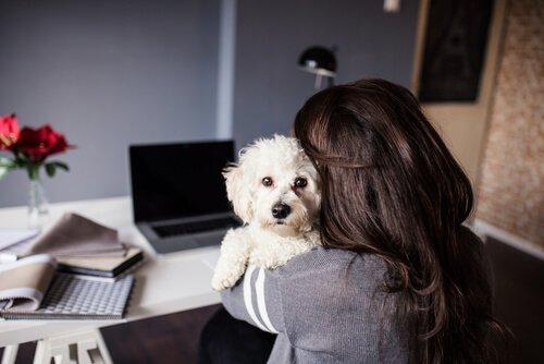 Hunde und Menschensprache