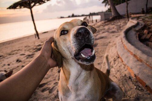 Hunde verstehen Menschen