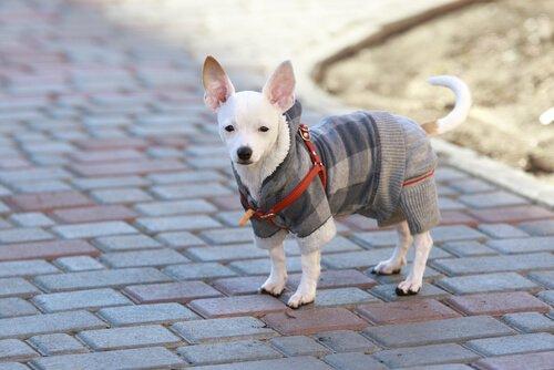 Wie du deinen Hund am besten auf den Winter vorbereitest