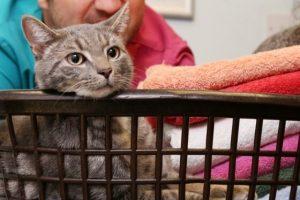 Warum begleitet mich meine Katze ins Badezimmer