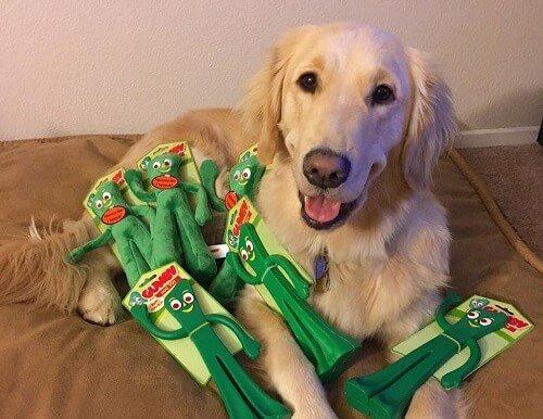 Hundebesitzer verkleidet sich als Lieblingsspielzeug seines Vierbeiners