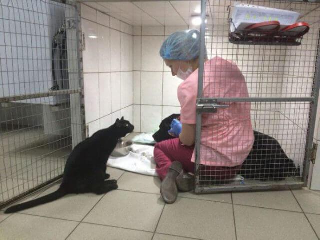 Luzifer mit einem Patienten