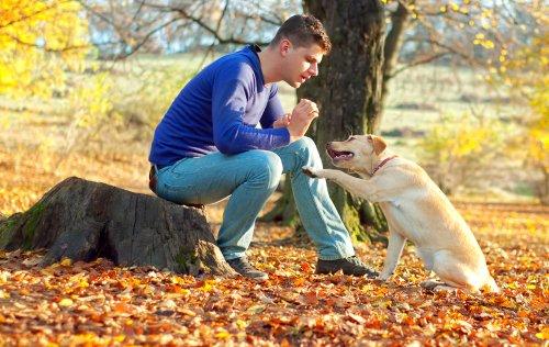 Wie kann man einem Hund den Rückruf beibringen?