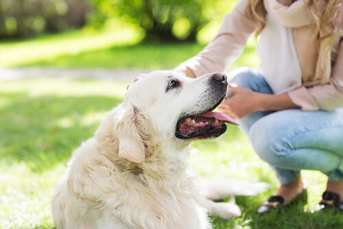 Massagen für Hund