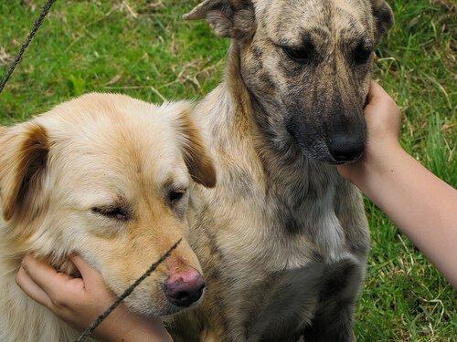 Massagen für Hunde