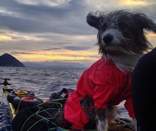Nirvana die Seemannshündin auf Reisen