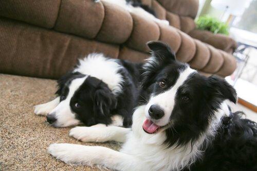 Wie sich die Verlustangst eines Hundes beruhigen lässt