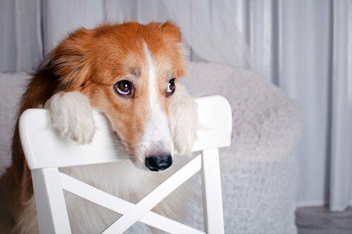 Videos mit Tierquälerei im Internet: Was tun?