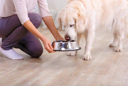 Unsere Lebensmittel sind nicht immer gut für Hunde