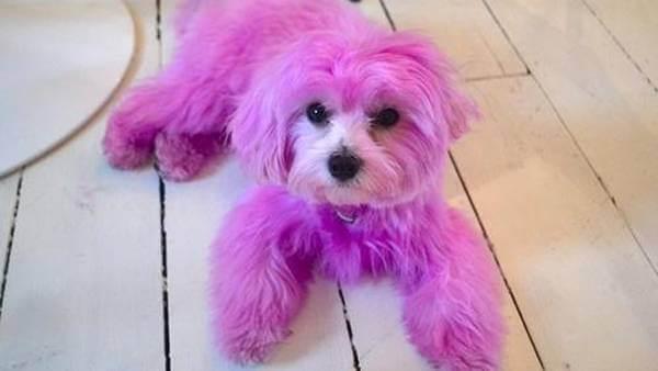 Polizei sucht die Verantwortlichen für rosa besprühten Hund