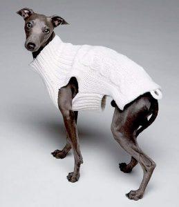 Vermenschlichung eines Hundes durch Kleidung