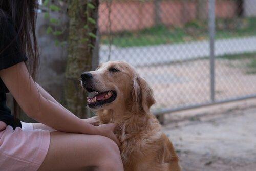 Können Hunde Menschensprache verstehen?