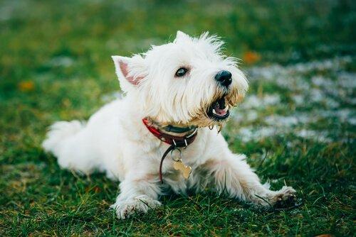 Was tun, wenn mein Hund ständig bellt? 6 Tipps