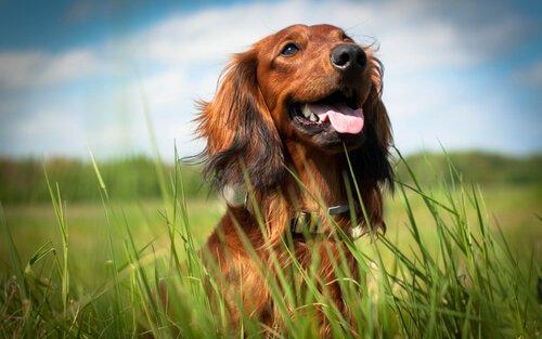 Wie weißt du, dass dein Hund glücklich ist?