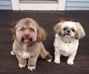 der Hund Yogi mit Freundin