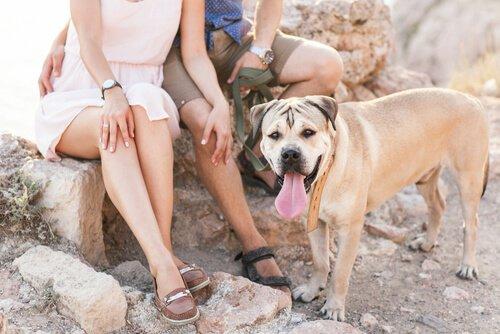 5 Vorteile, die das Zusammenleben mit einem Hund mit sich bringen