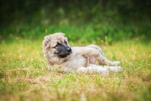 8 Fehler im Park - Hund liegt auf Wiese