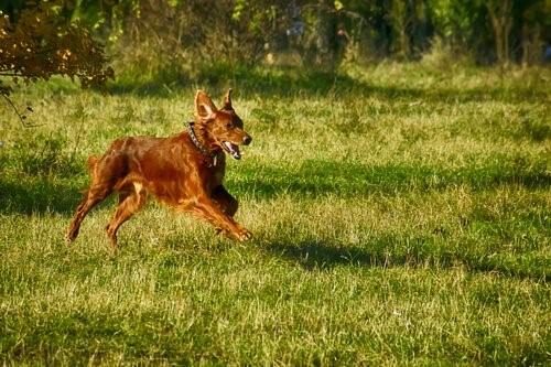 8 Fehler, die wir mit unserem Hund im Park machen