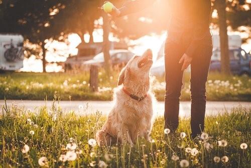 8 Fehler im Park - Hund spielt