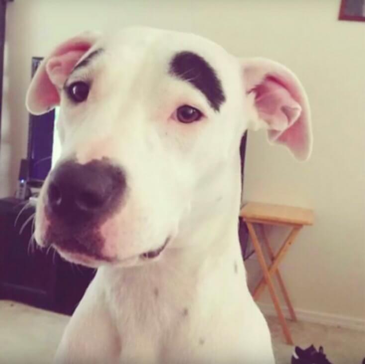 8 Hunde mit einzigartigem Fell - Der Augenbrauen-Hund