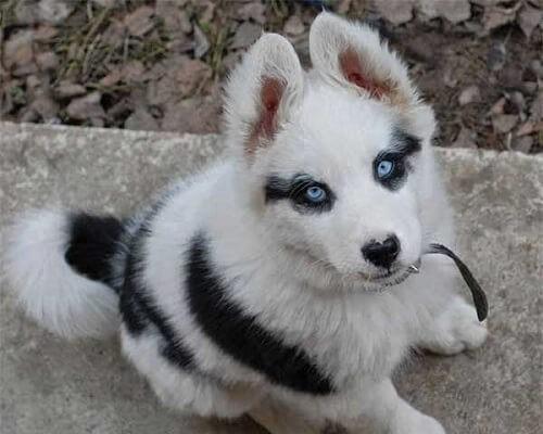 8 Hunde mit einzigartigem Fell