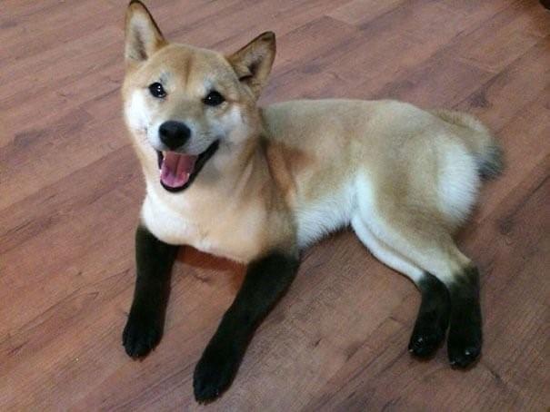 8 Hunde mit einzigartigem Fell - Der gestiefelte Hund