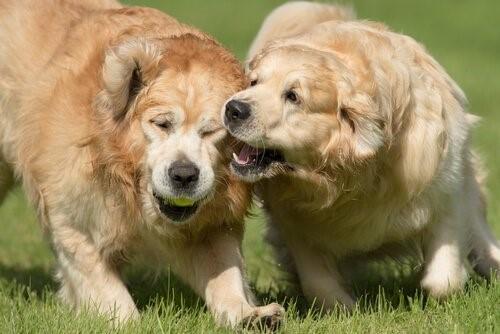So verhinderst du, dass dein Hund beißt