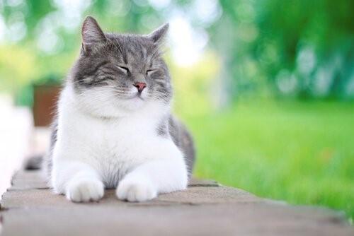 5 Dinge, die deine Katze glücklich machen können