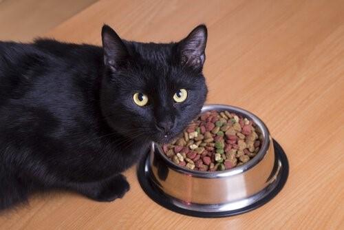 Deine Katze glücklich machen - Katze beim Fressen