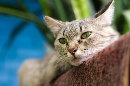 Deine Katze glücklich machen - Katze liegt auf Kratzbaum