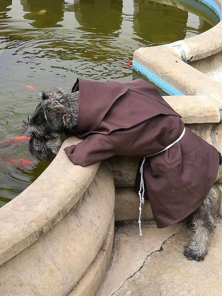Der Hund der ein Mönch wurde - Fray Bigotón