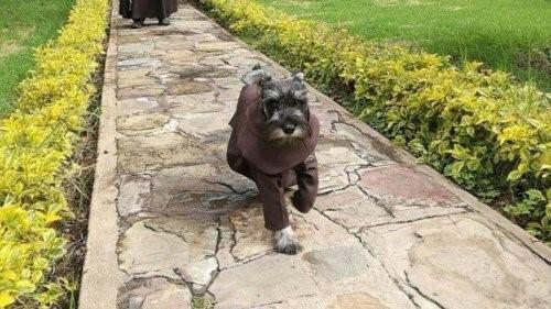 Der Hund, der ein Mönch wurde