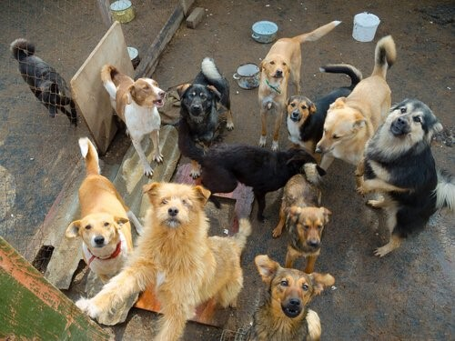 Der Schutzengel verlassener Hunde - Gerettete Hunde