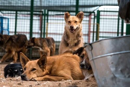 Der Schutzengel verlassener Hunde