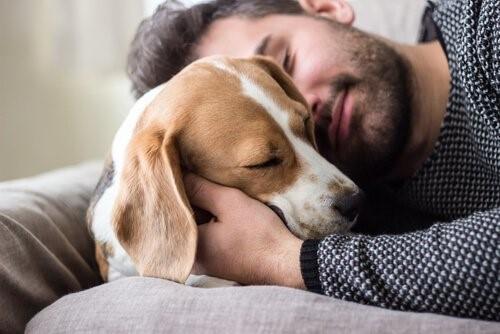 Der Hund ist der beste Freund des Menschen