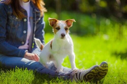 Die Bindung zwischen Hund und Mensch - Hund mit Frauchen auf Wiese