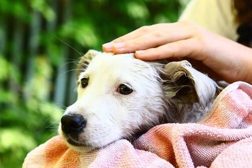 Die Bindung zwischen Hund und Mensch - Nasser Hund
