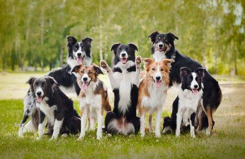 21 erstaunliche Dinge über Hunde (2. Teil)