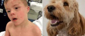 Ein Hund rettet ein Kind mit Down-Syndrom
