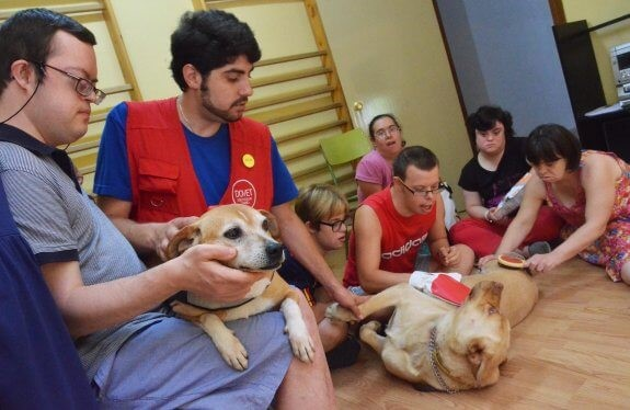 Ein Hund rettet ein Kind mit Down-Syndrom - Hundetherapie