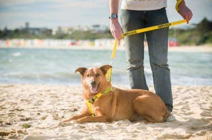 Die Halsbandfarbe und der Charakter des Hundes