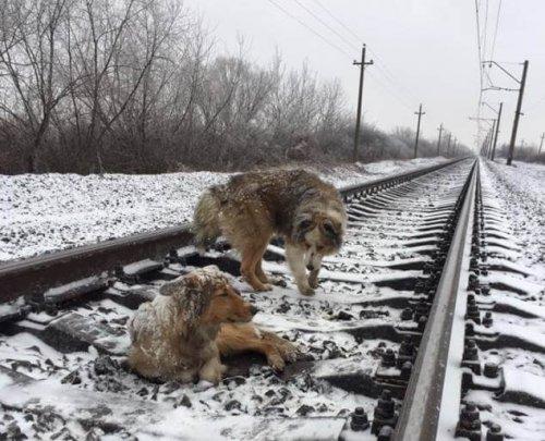 Herzzerreißende Geschichte eines Hundes, der seine Freundin beschützte