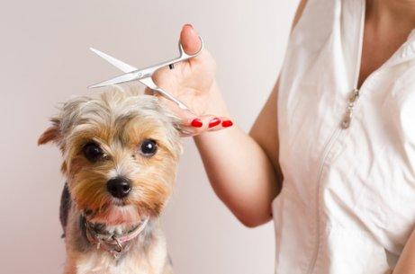Tipps für Hunde, die beim Friseur Angst haben