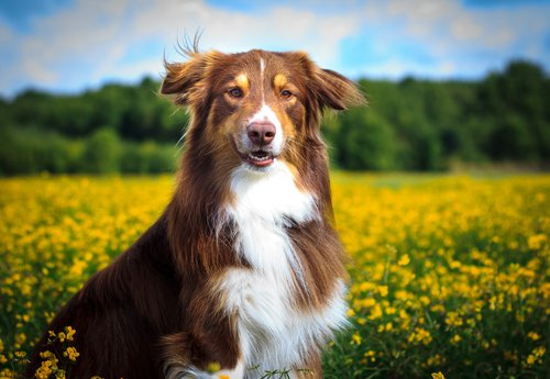 Hund inmitten von Pflanzen
