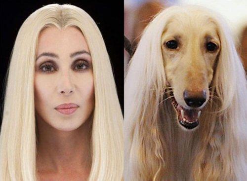 Hund und Besitzer sehen sich tierisch ähnlich