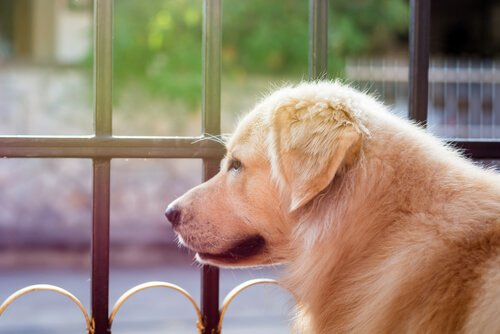 George Clooney spendet 10.000 Dollar, um Hunde zu retten
