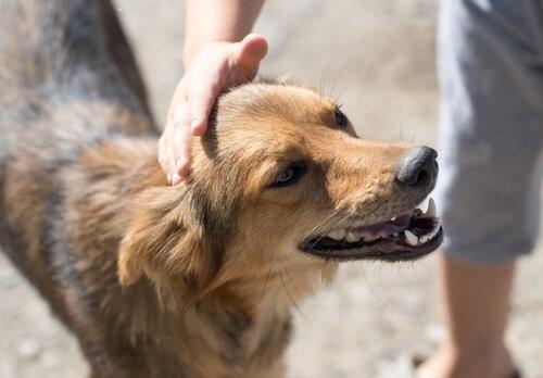 Stiftung für ausgesetzte Tiere - Hund