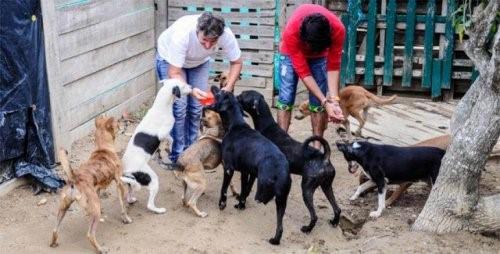 Stiftung für ausgesetzte Tiere wird auf die Straße gesetzt
