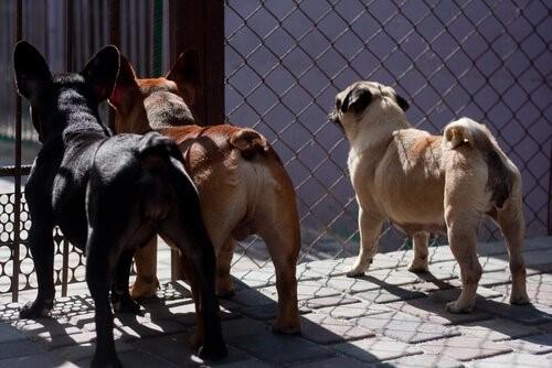 Taiwan verbietet Katzen- und Hundefleisch