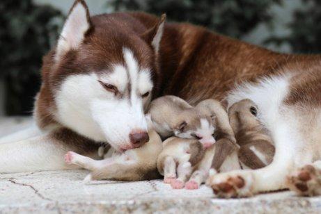 Wann kann man Hundewelpen von ihrer Mutter trennen?